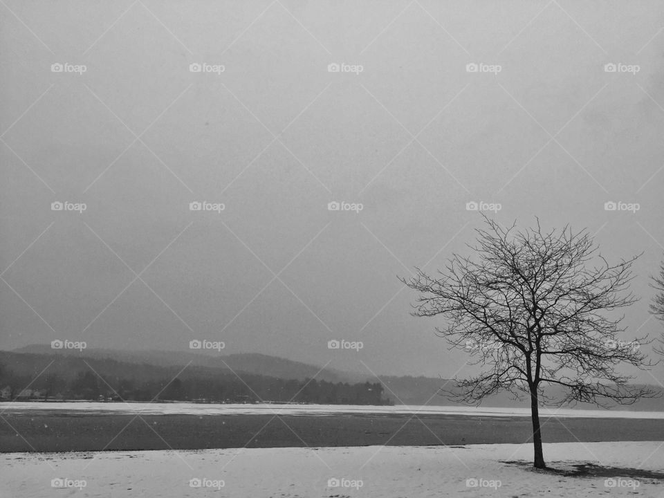 Winter tree. Lonely snow day