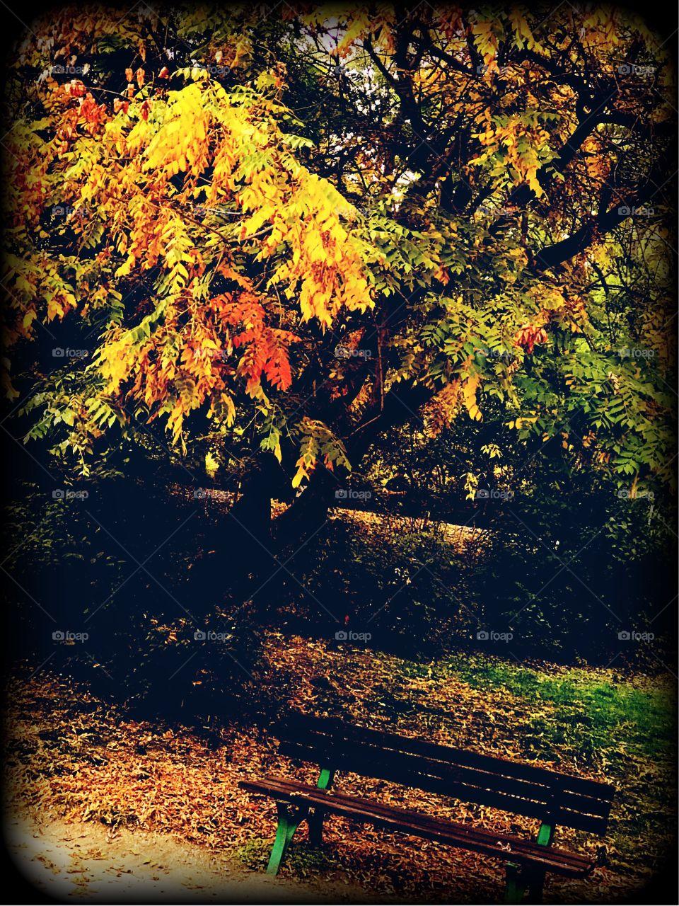 Autumn Vibes..