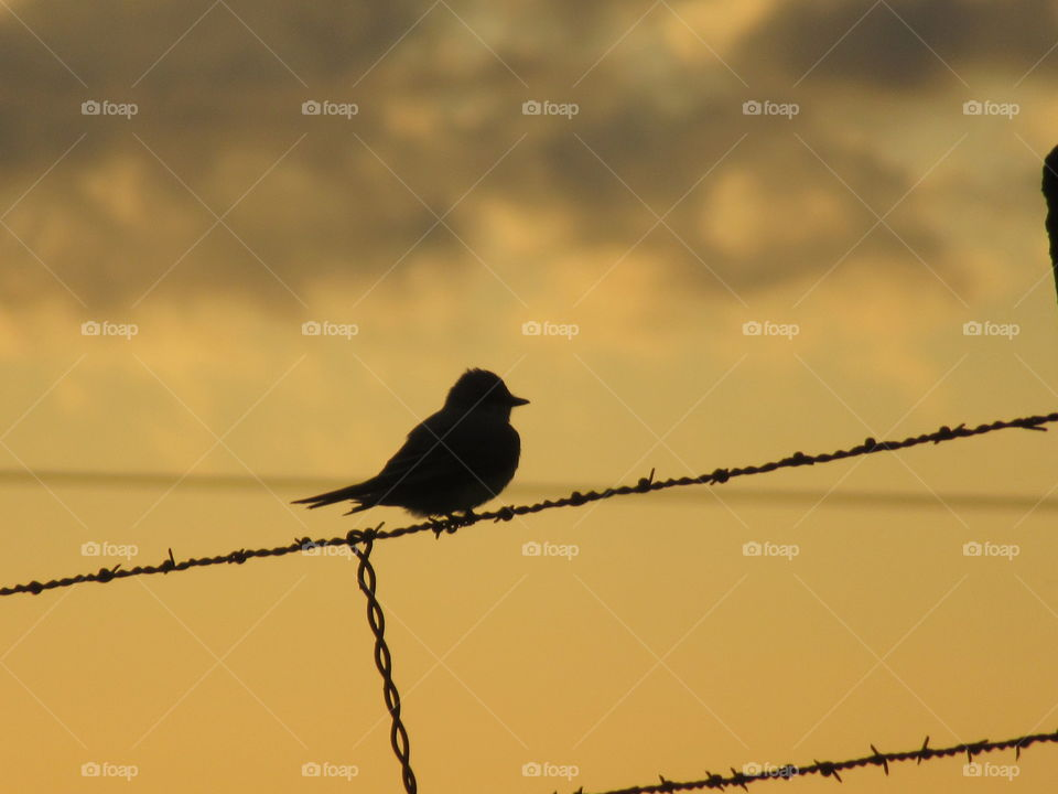 Bird on a fence wire