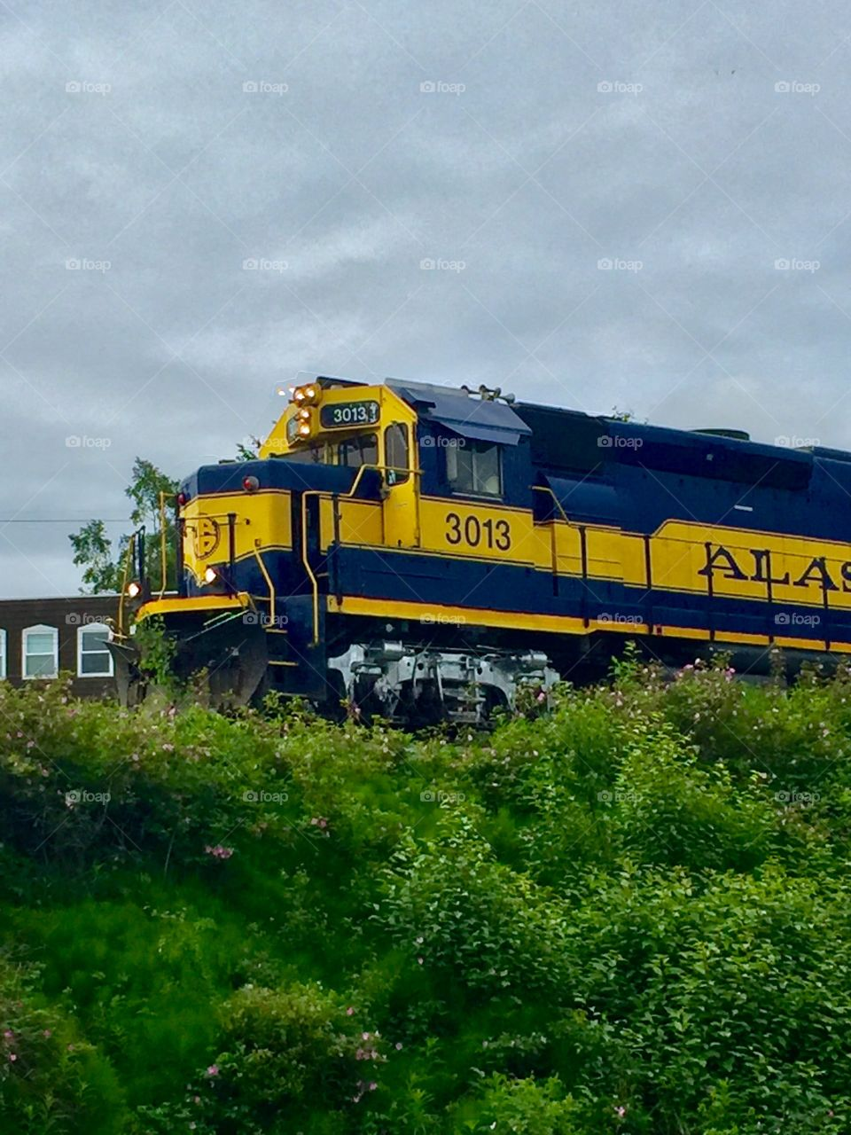 Timing is Everything.  Seward Coastal Train. The Tony Knowles Coastal Trail. Anchorage , Alaska