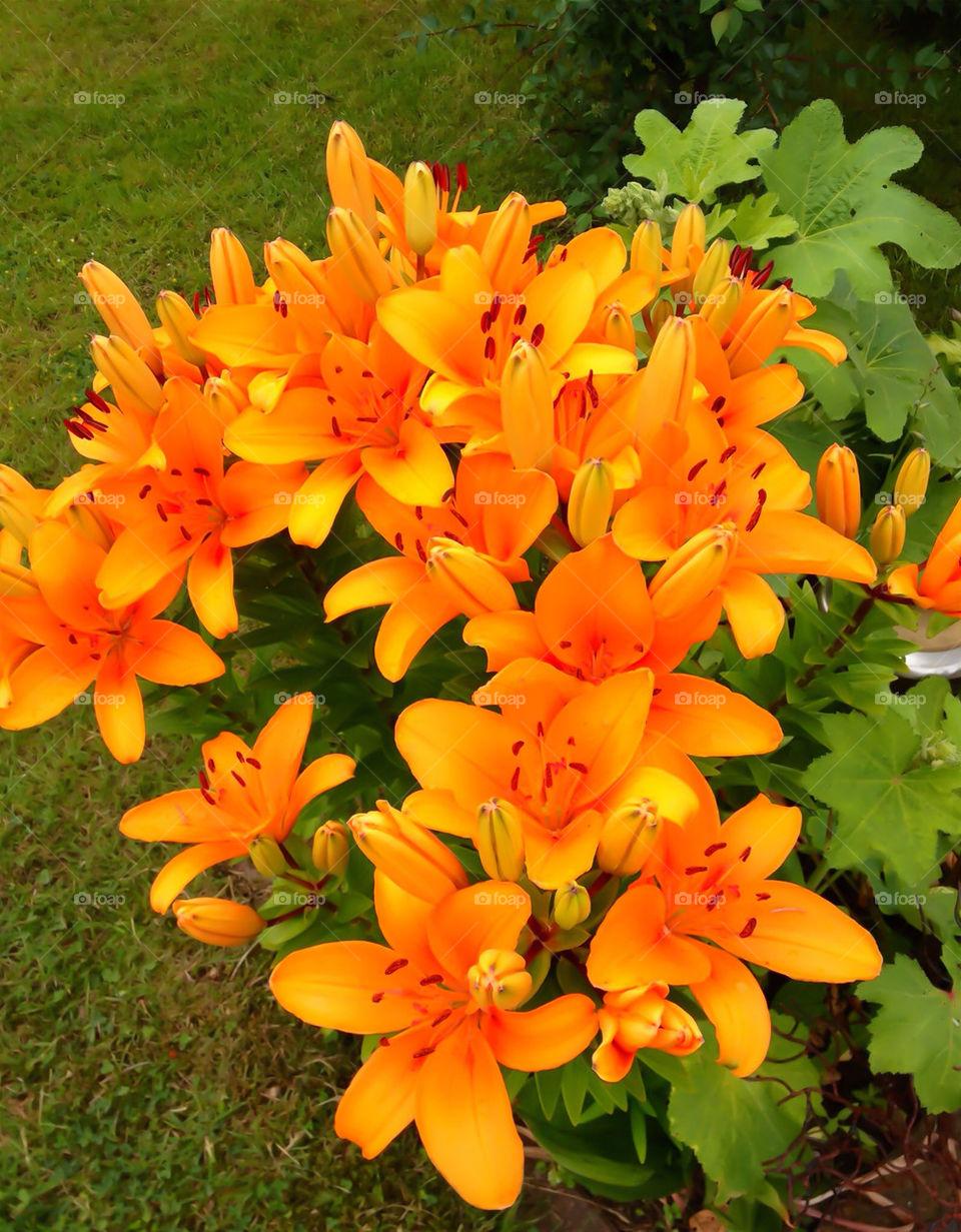sweden garden yellow flower by elluca