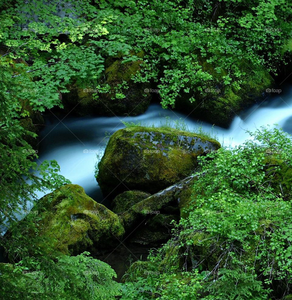 A creek with smoothed out water flows through banks with boulders and lush green bushes and moss in Southern Oregon on a summer morning.