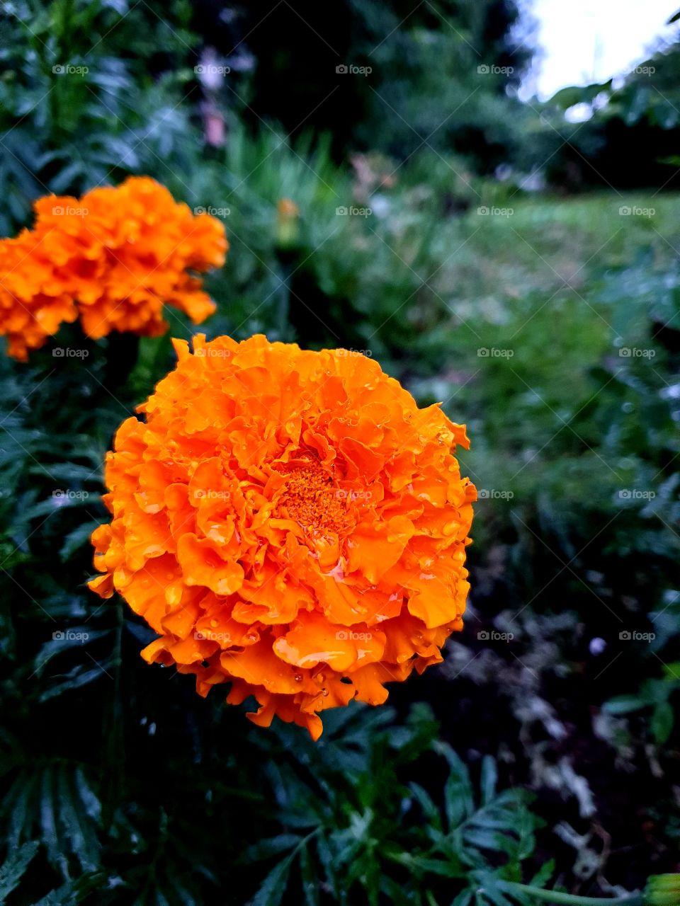 цветок колор