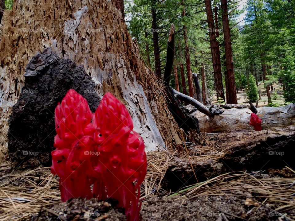 Snow plants in forest