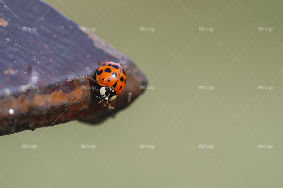 Ladybird on wood