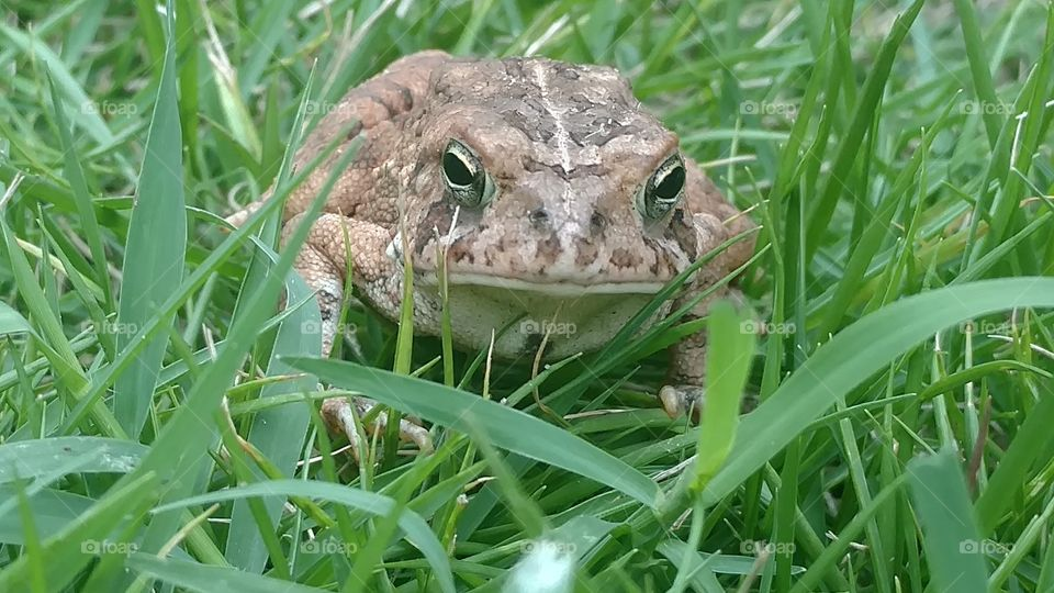 Grass, Nature, Summer, Outdoors, Animal