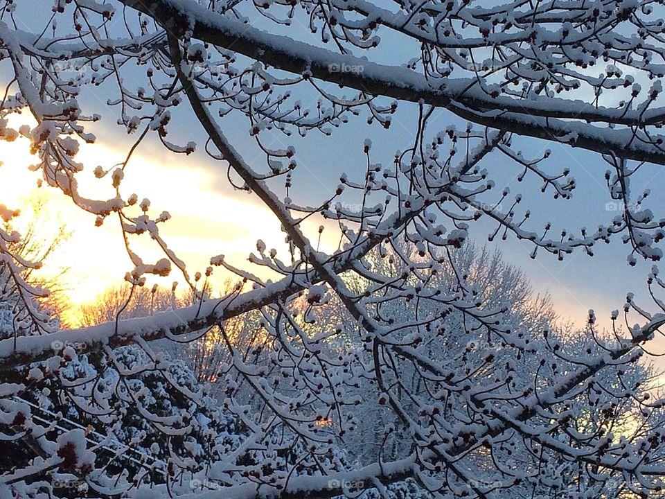 Winter/ last snowfall