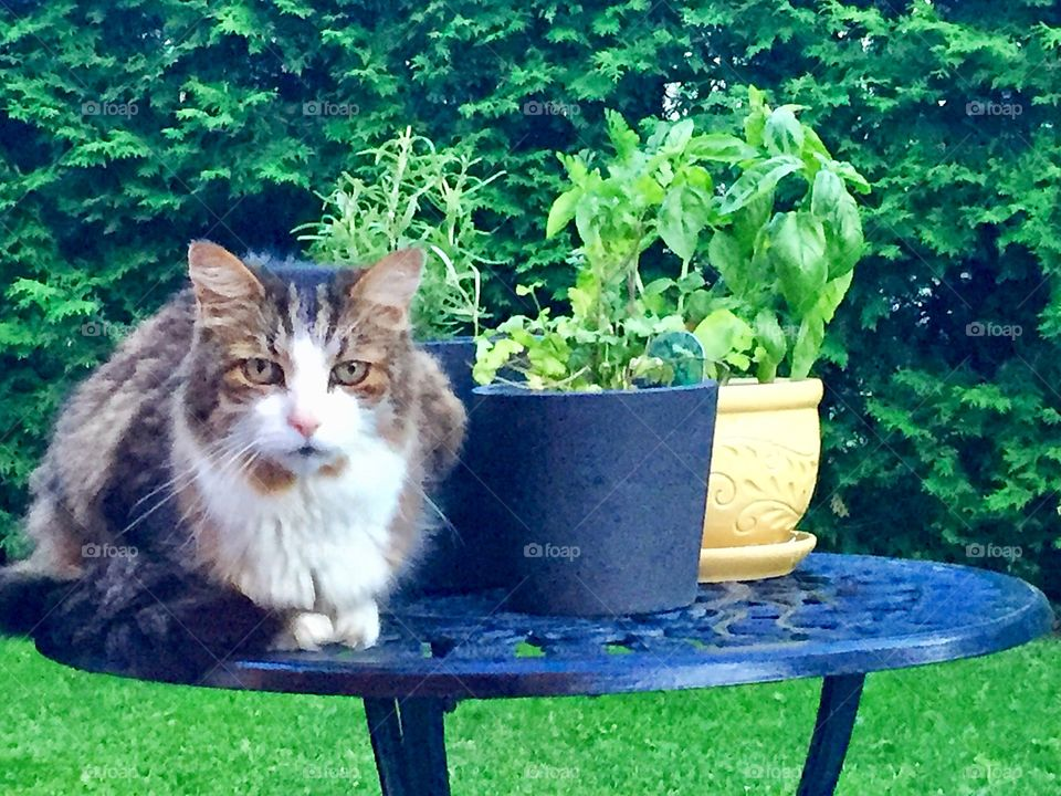 Cat laying on table among potted plants