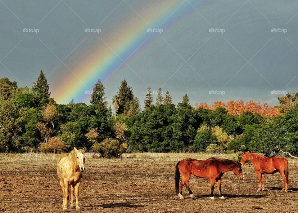 Horses And Rainbows