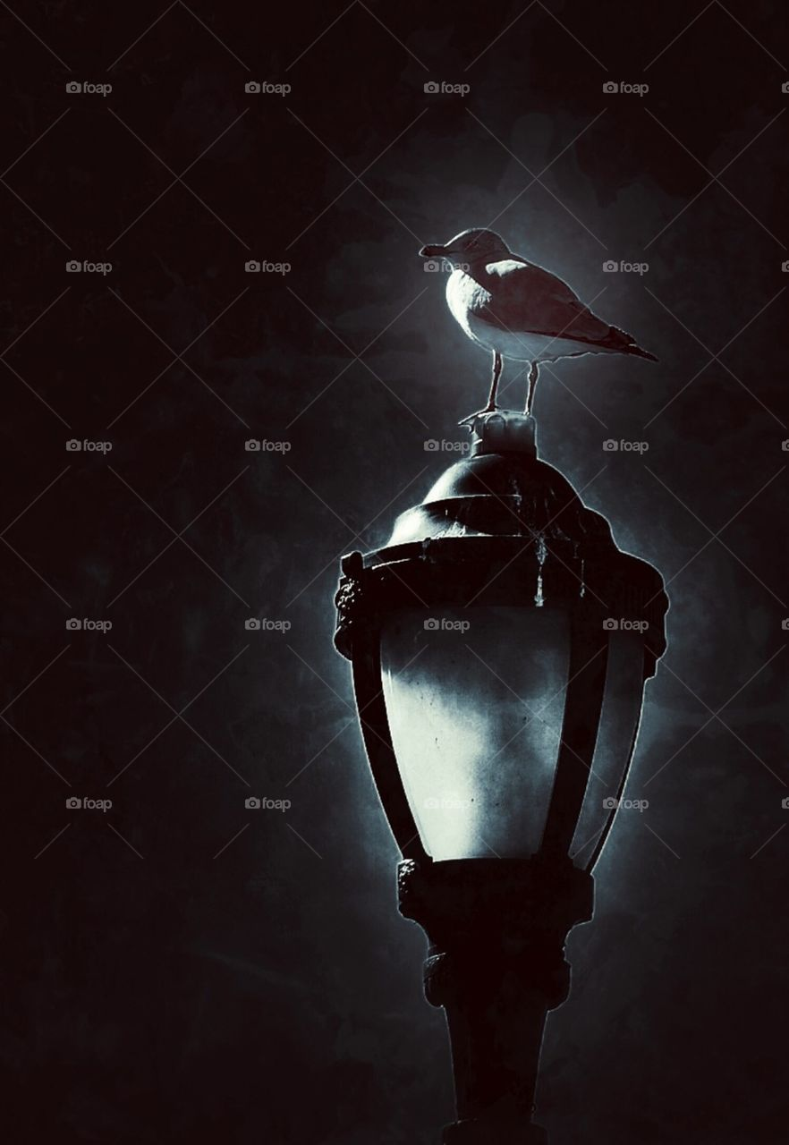 Seagull sitting on a lamp