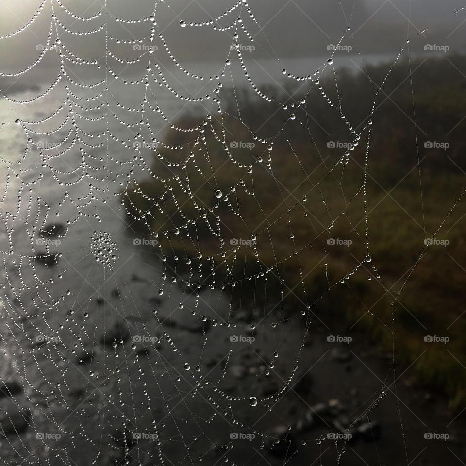 Wet Wild Web