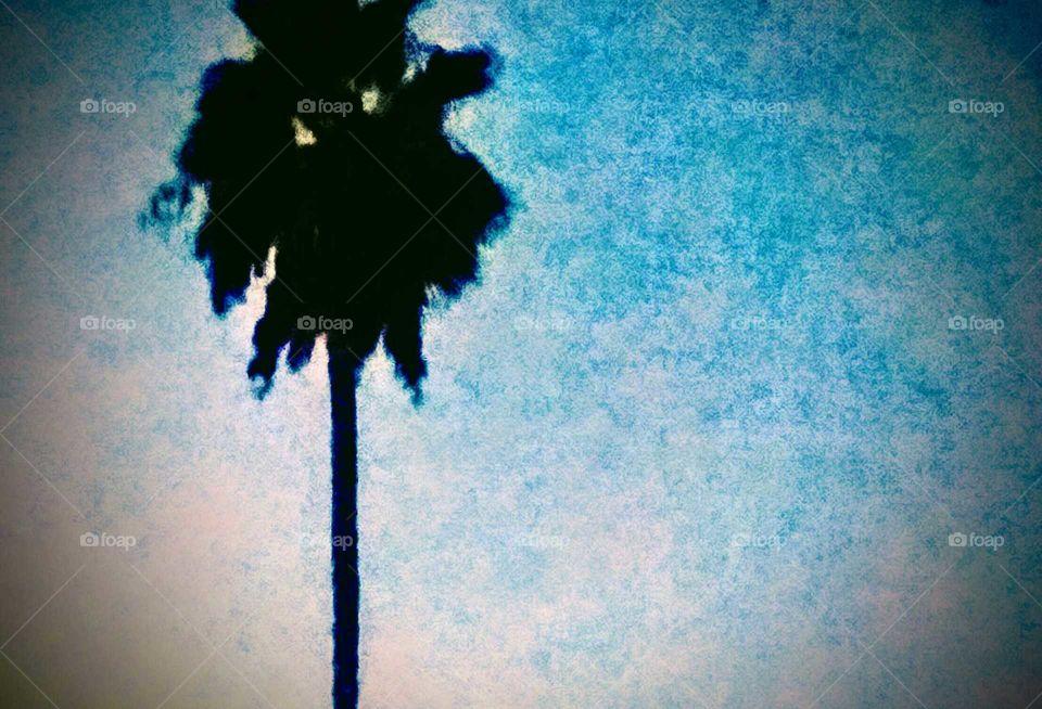 Dusky Sky and Silhouette of Palm Tree