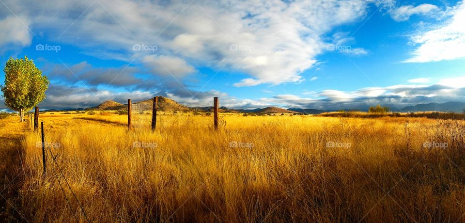 Scenic view of ranchland in Arizona