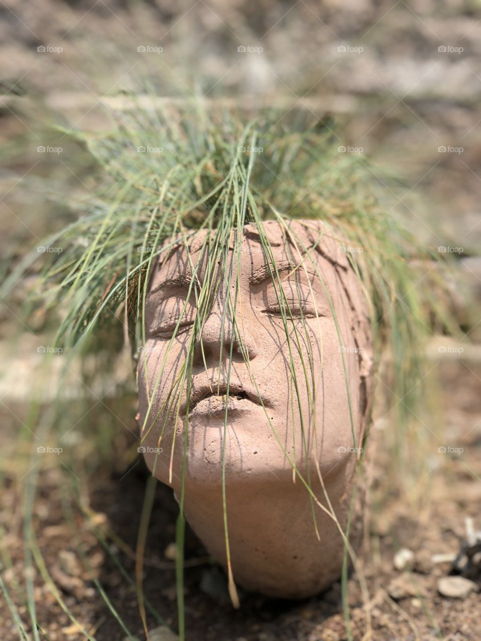 Plant that looks like hair growing out or a ceramic container with a face.