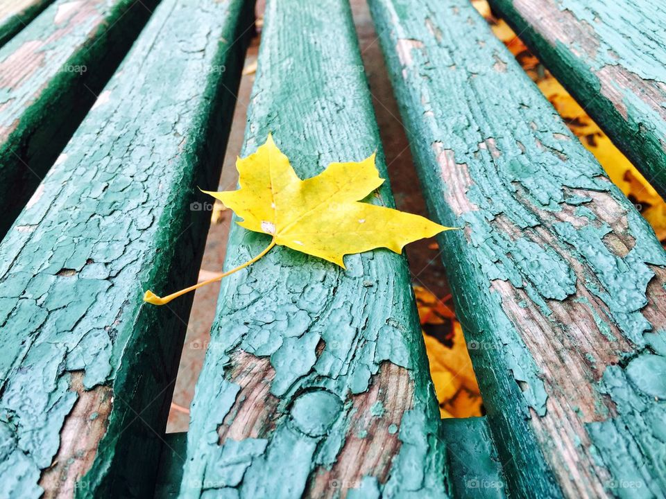 Autumn leaf on old wooden plank
