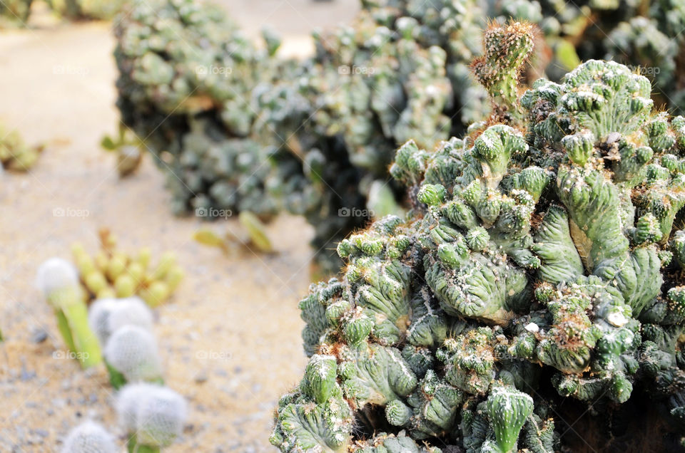 plant cactus desert by seasky