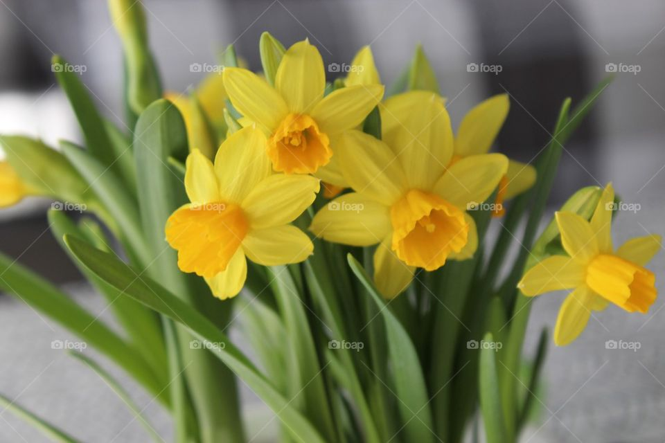Small easter lilies