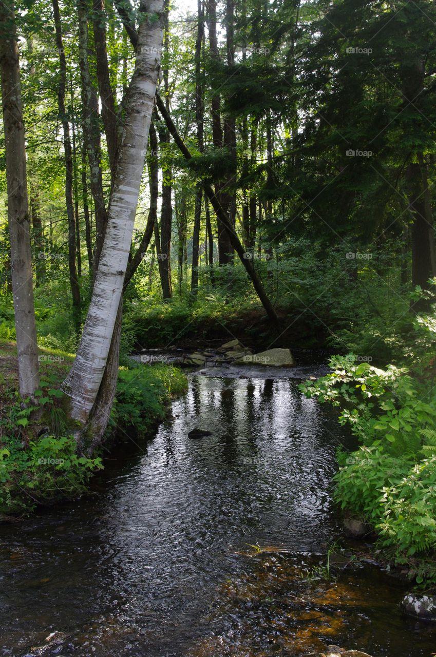 Pine Brook