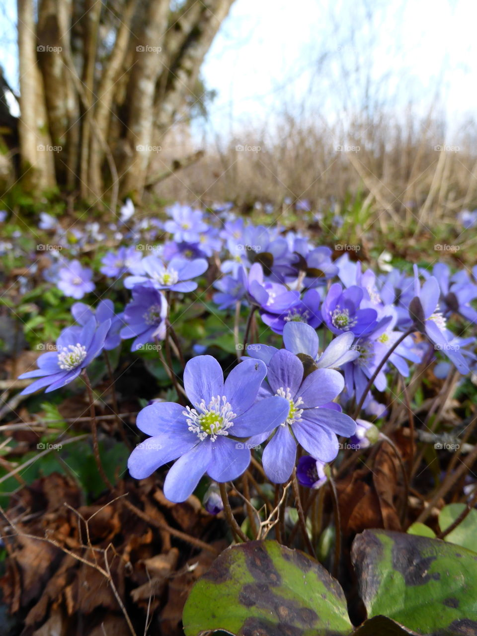 Anemones in the forest