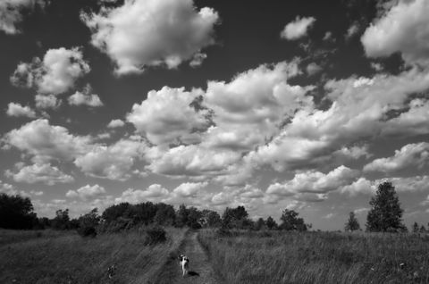 Dog on street against cloudy sky