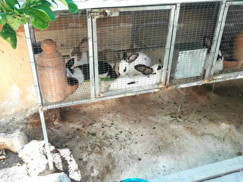 bunnies farm