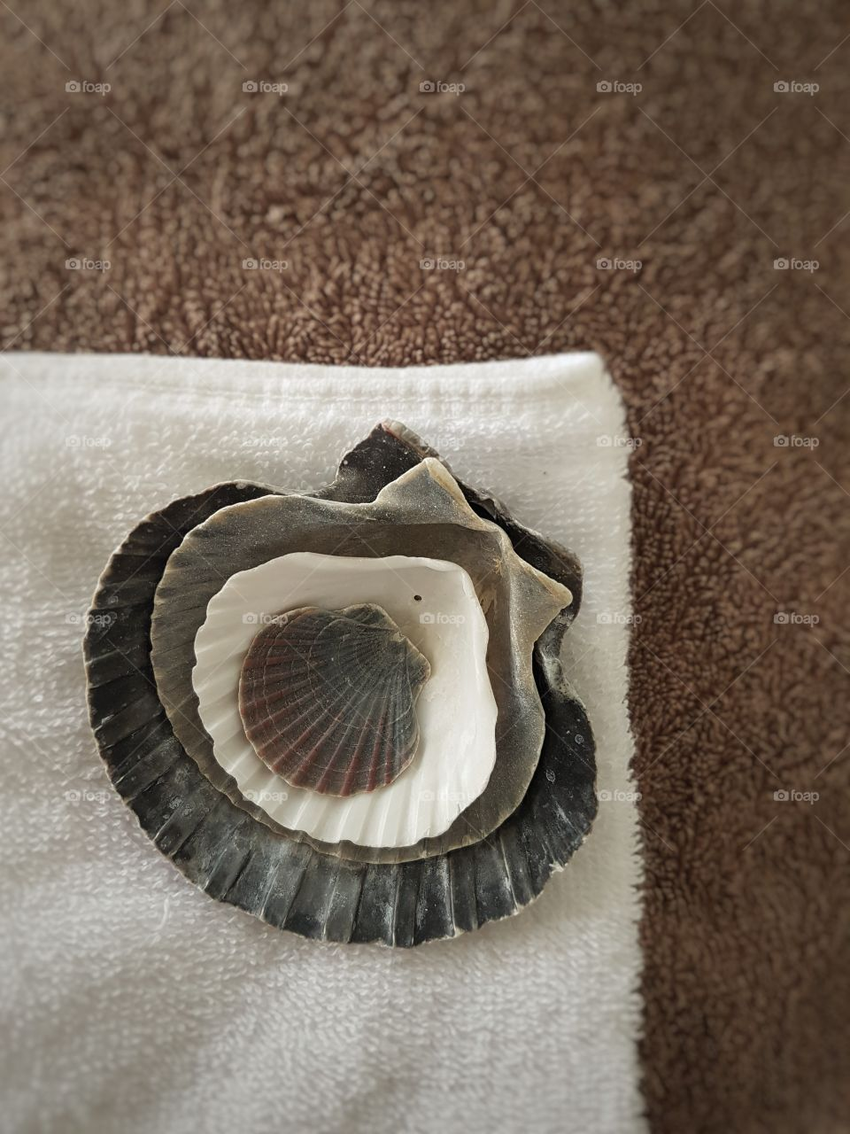 Nesting Sea Shells on stack of folded towels