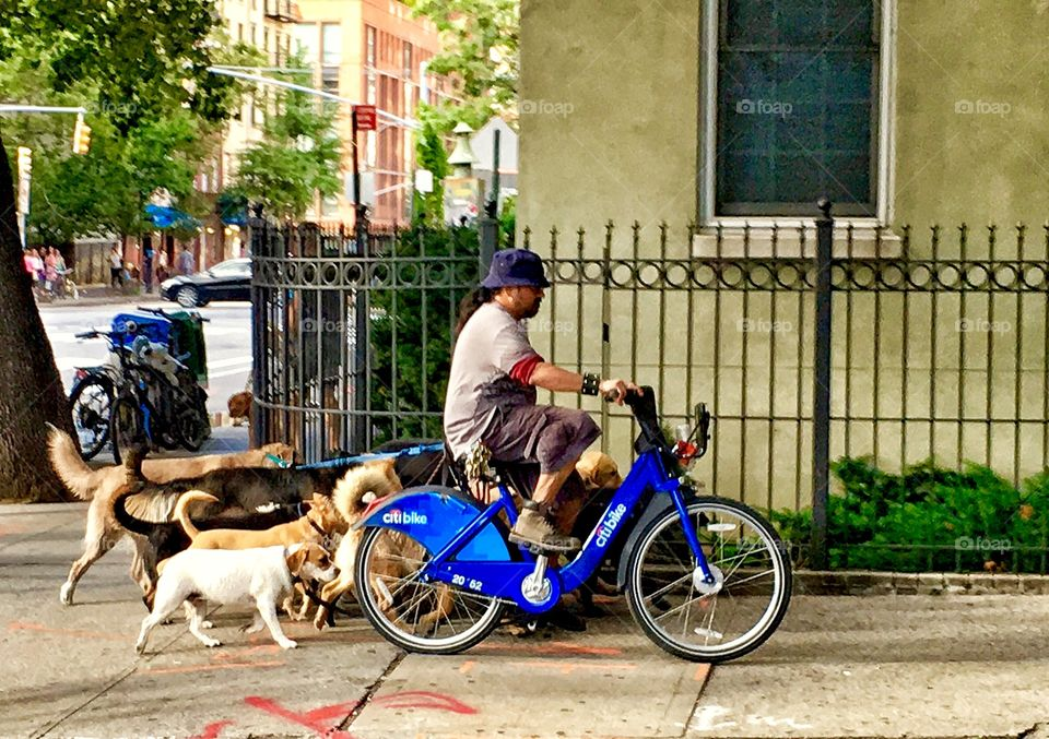Dog Walker on a Bike. Only in New York.