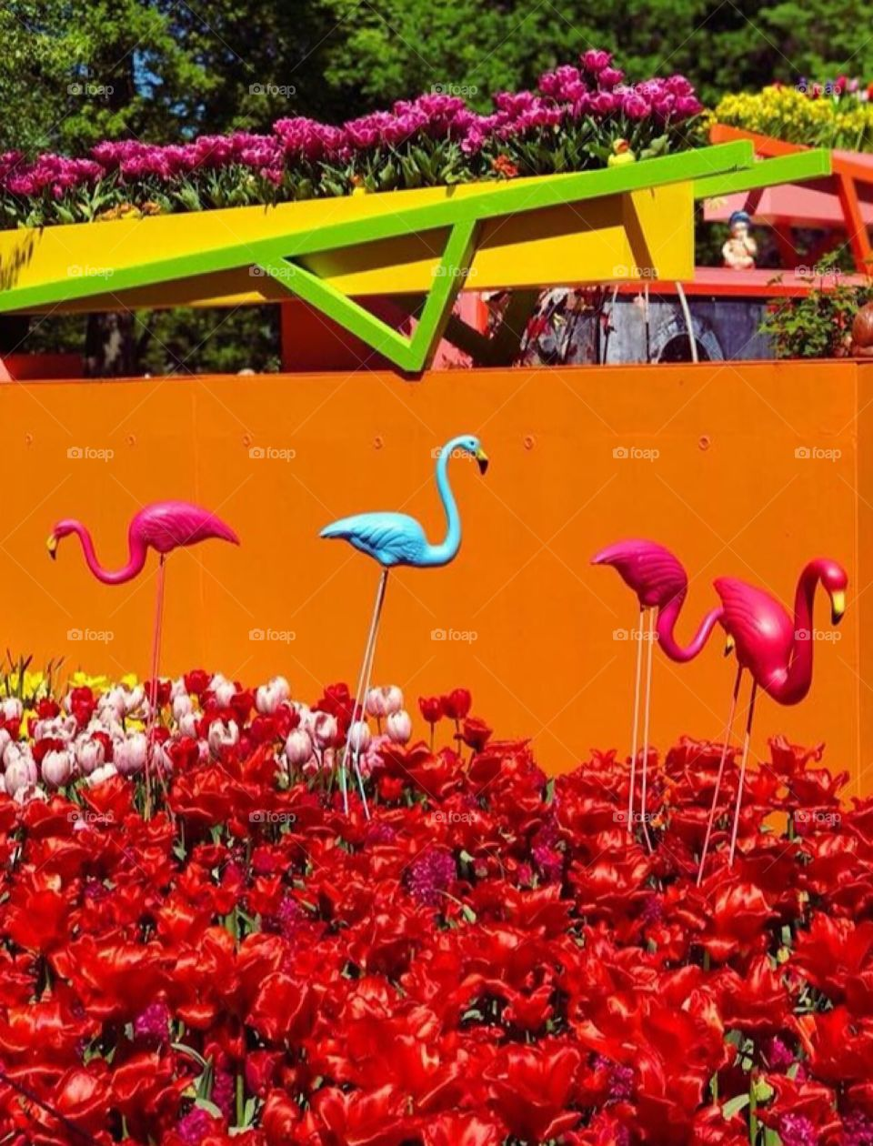 Amsterdam extremely vibrant flowers and flamingos