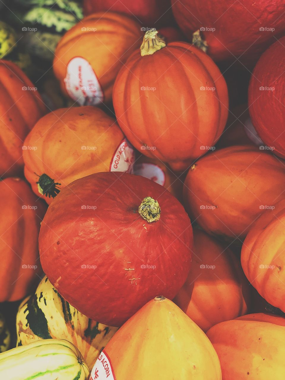 Pumpkins And Gourds In The Pumpkin Patch, First Signs Of Autumn, Pumpkins Ready For Halloween, Pumpkin Decorating, Colorful Pumpkins And Gourds