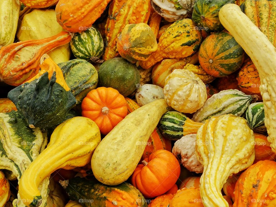 Colorful Autumn Pumpkins And Gourds