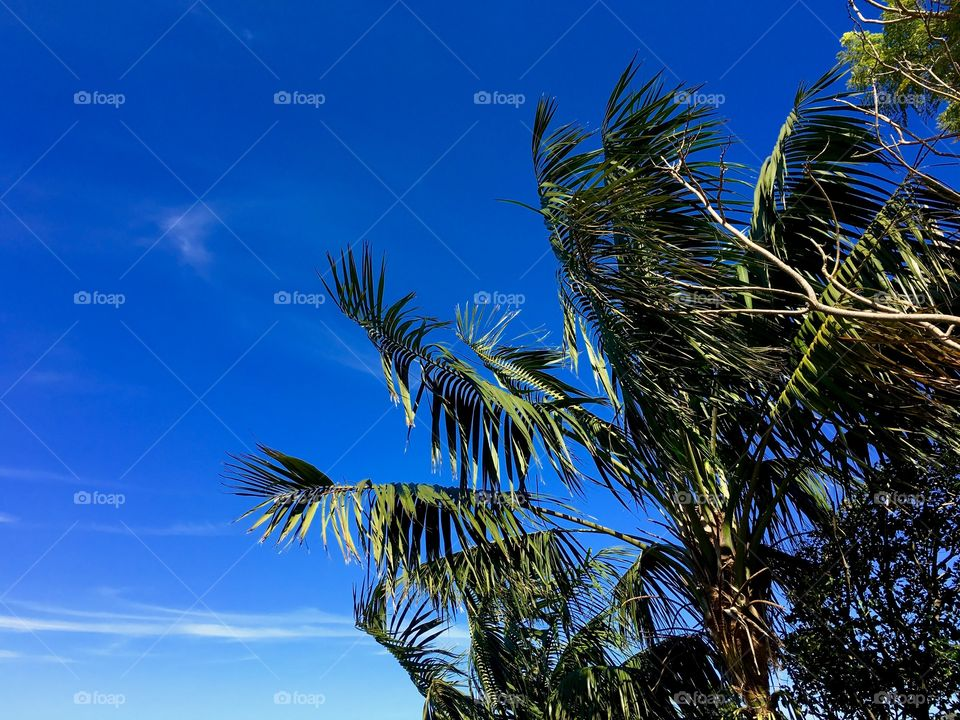 View of palm trees in Sydney, Australia