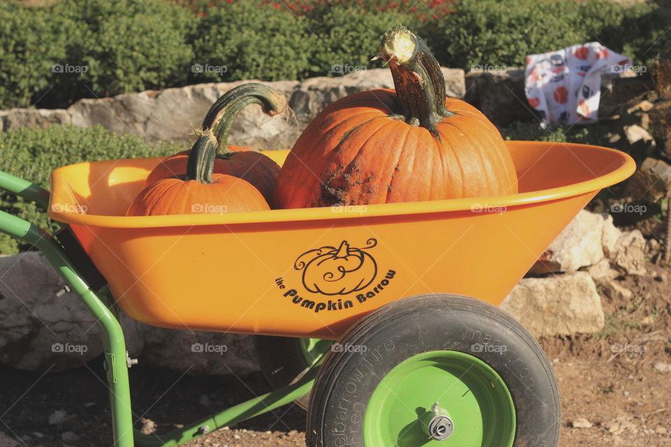 The Pumpkin Barrow