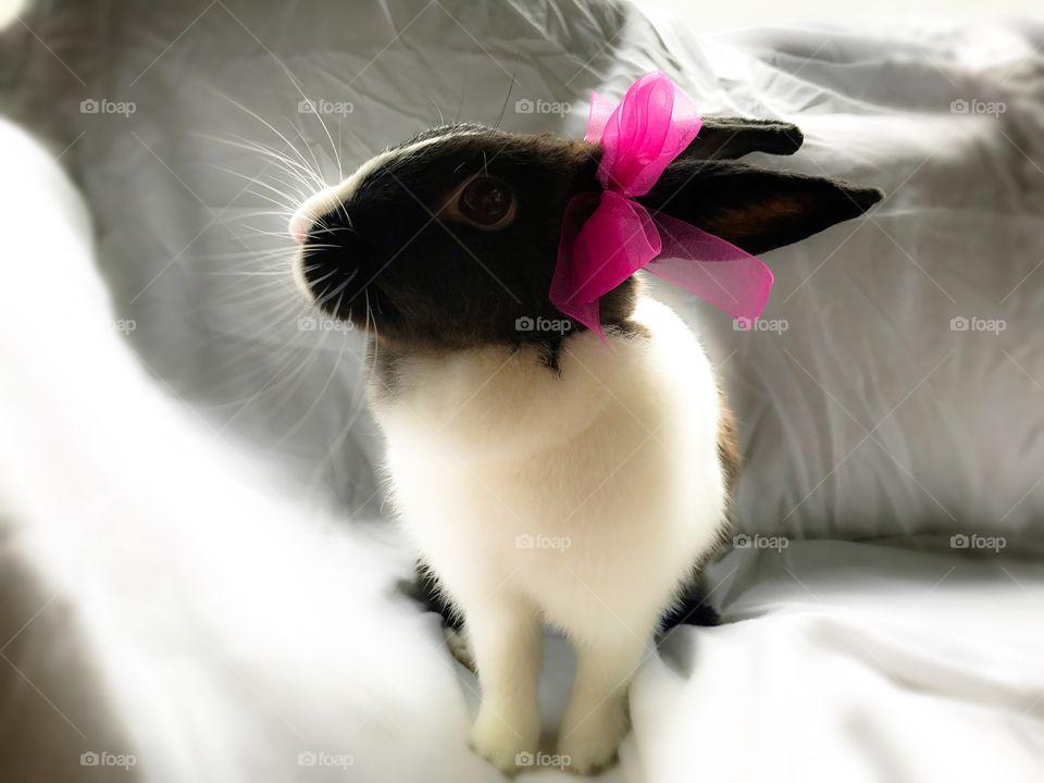 Cute fluffy  bunny wearing a bow