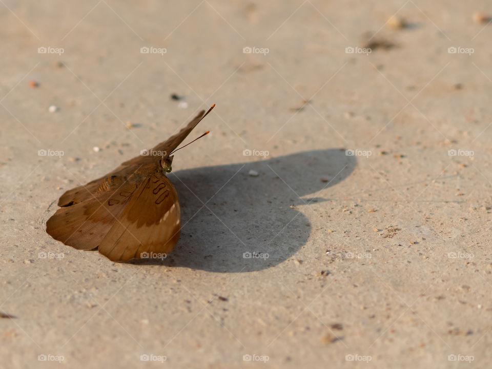 Beautiful Moth & Its Shadows