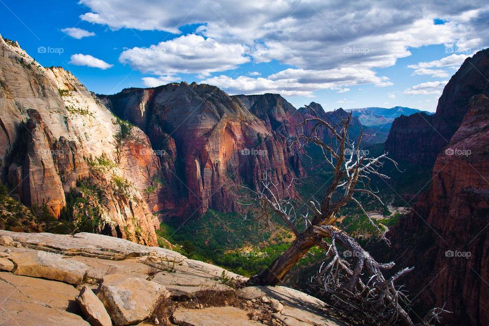 Beautiful landscape in Zion national park