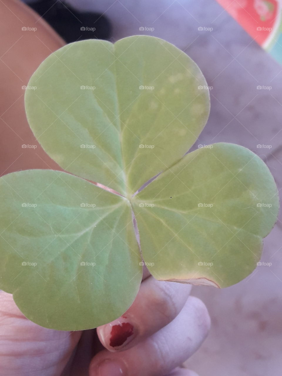 i hold one beautiful green leaf different and beautiful