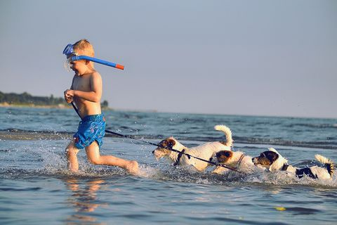 Boy playing. A little boy playing with dogs