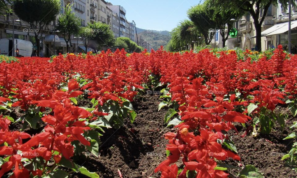 Landscape through red flowers