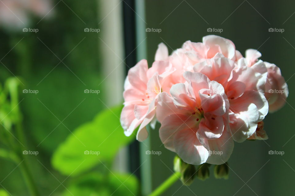 green background and flowers