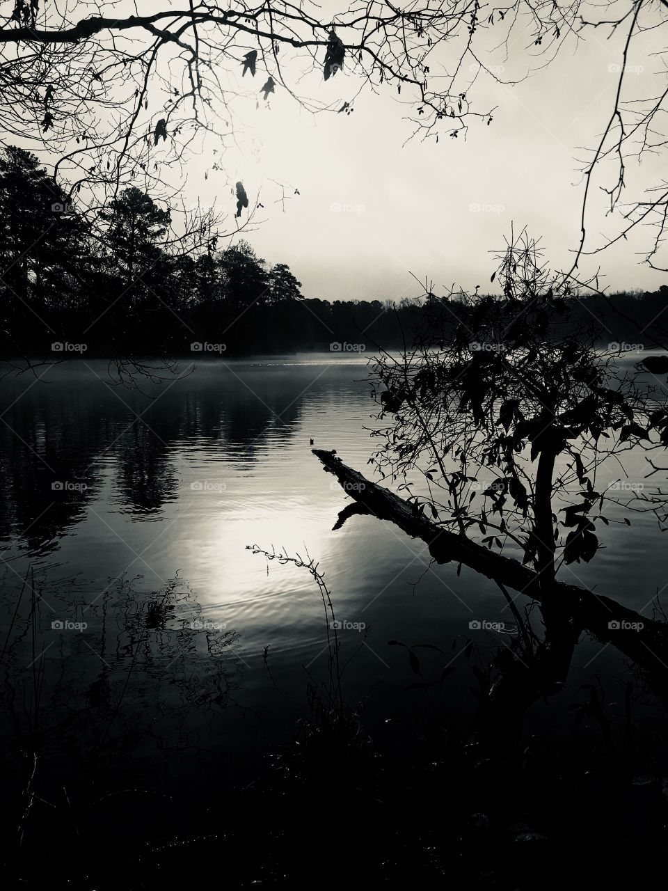 Black and white of a misty morning at the lake