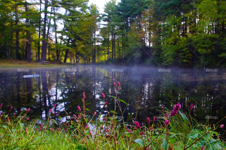 Early Morning Pond