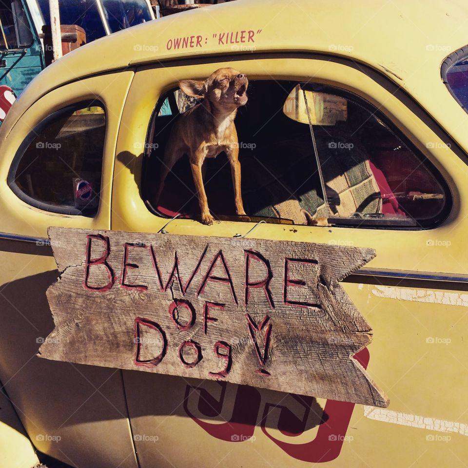 beware of dog . iPhone Capture