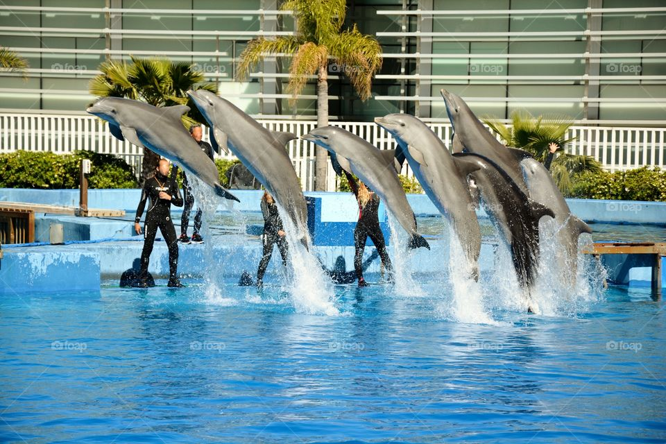 a dolphinarium with seven dolphins jumping in a swimming pool