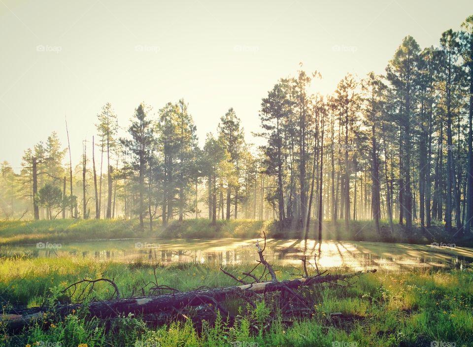 Sunlight passing through trees