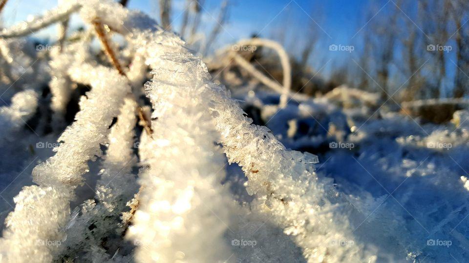frozen morning