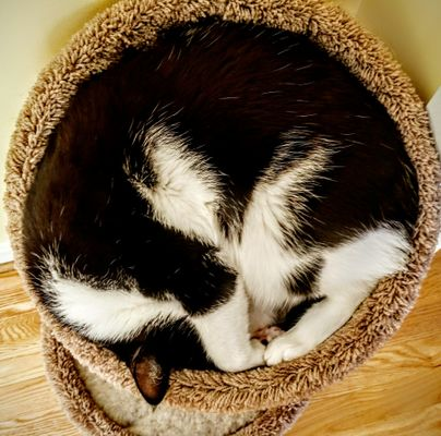 High angle view of a cat curled up and asleep