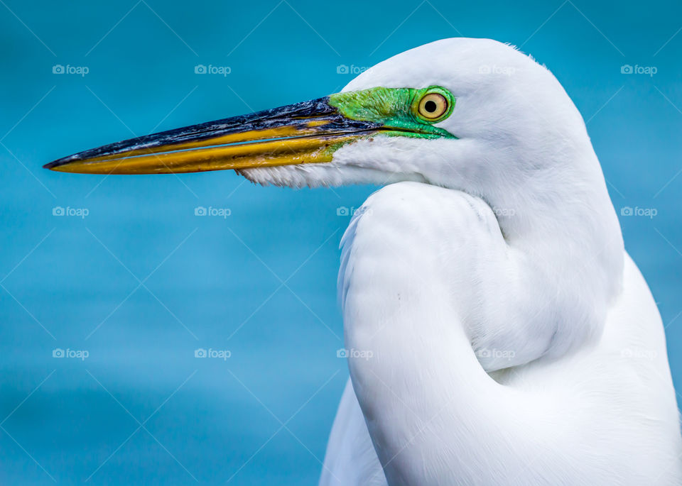 Close-up of white bird
