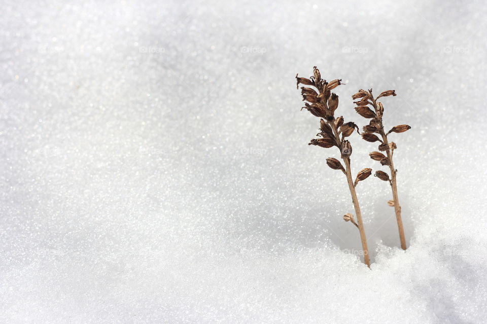 Plants in the winter snow, close up