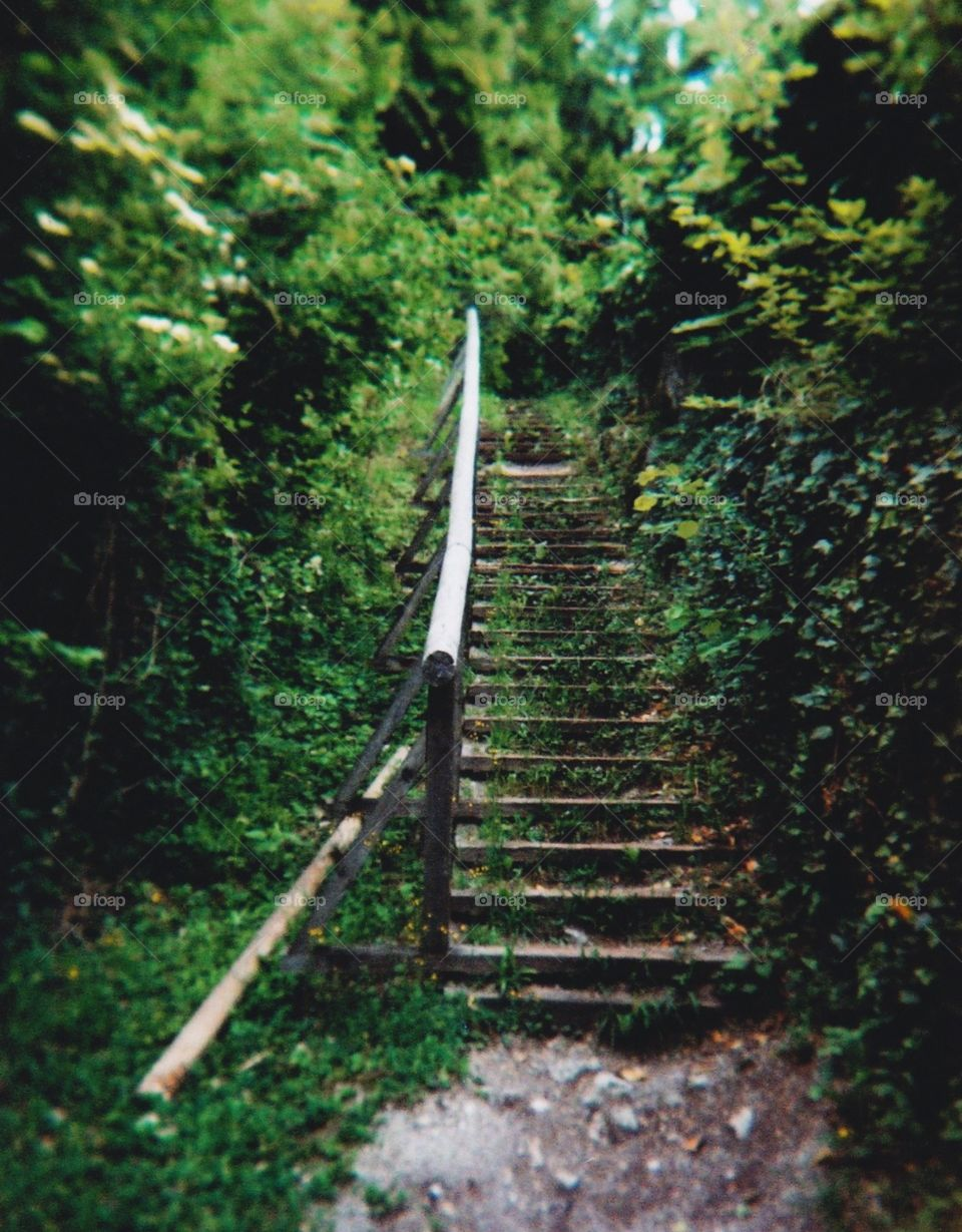 Ivy-covered fairytale staircase on a small forested mountain in Salzburg, Austria