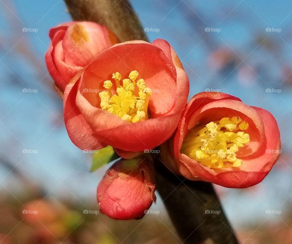 Spring blossoms close up
